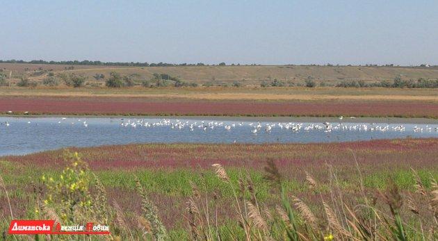 На Тилигуле провели кольцевание птиц.