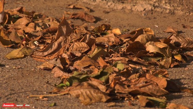 """""""СТОП-дим"""": у Першотравневому НВК впроваджують екологічний проєкт з припинення спалювання листя."""